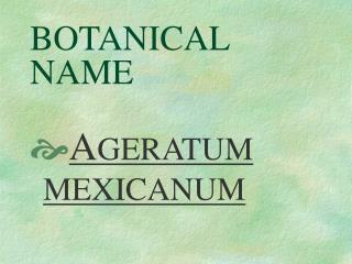 BOTANICAL NAME