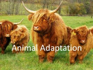 Animal Adaptation