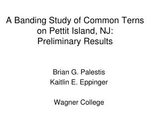 A Banding Study of Common Terns on Pettit Island, NJ:  Preliminary Results