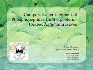 Comparative enrichment of Phosphopeptides from ergosterol-treated  A.thaliana  leaves