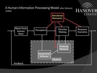 A Human Information Processing Model  after Wickens (1984)