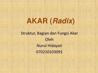 AKAR ( Radix )