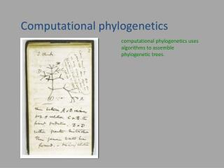 Computational phylogenetics