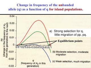 Change in frequency of the  un banded  allele (q) as a function of q  for island populations.