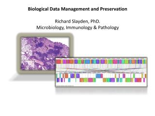 Biological  D ata Management and Preservation Richard Slayden, PhD.