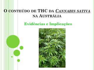 O conteúdo de THC da Cannabis sativa na Austrália