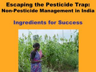 Escaping the Pesticide Trap: Non-Pesticide Management in India Ingredients for Success