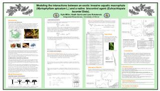 Predator -  Euhrychiopsis lecontei  Growth Model