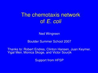 The chemotaxis network of  E. coli