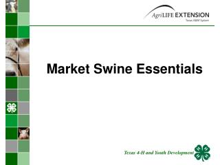 Market Swine Essentials
