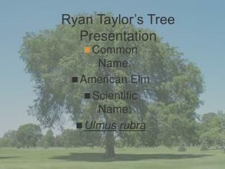 Ryan Taylor�s Tree Presentation