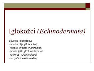 Igloko�ci  (Echinodermata)