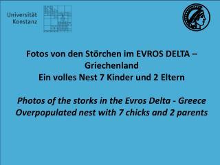 Fotos von den Störchen im  EVROS  DELTA  – Griechenland Ein volles Nest 7 Kinder und 2 Eltern