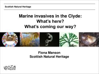 Marine invasives in the Clyde:  What's here?  What's coming our way?
