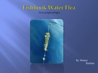 Fishhook Water Flea Cercopagis pengoi