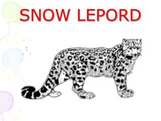 SNOW LEPORD