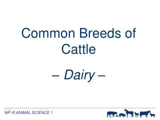Common Breeds of Cattle �  Dairy  �