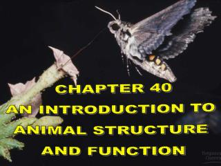 CHAPTER 40 AN INTRODUCTION TO  ANIMAL STRUCTURE  AND FUNCTION