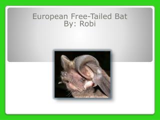 European Free-Tailed Bat By:  Robi