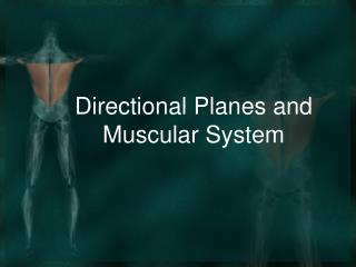 Directional Planes and Muscular System