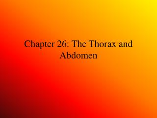Chapter 26: The Thorax and Abdomen