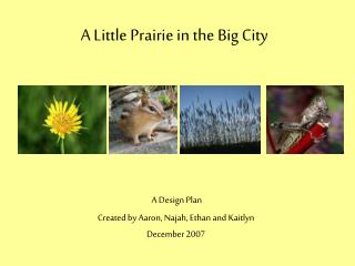 A Little Prairie in the Big City