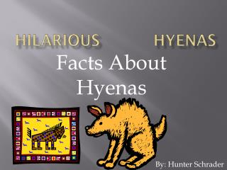 hilarious           hyenas