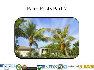 Palm Pests Part 2