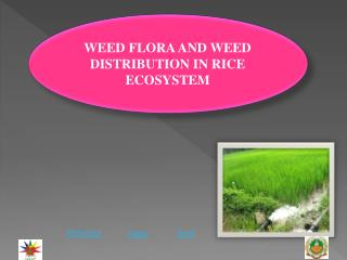 WEED FLORA AND WEED DISTRIBUTION IN RICE ECOSYSTEM