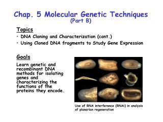 Chap. 5 Molecular Genetic Techniques  (Part B)