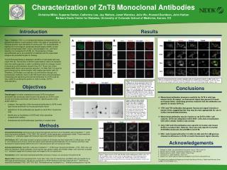 Characterization of ZnT8 Monoclonal Antibodies