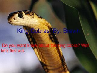 King Cobras  By: Brevin
