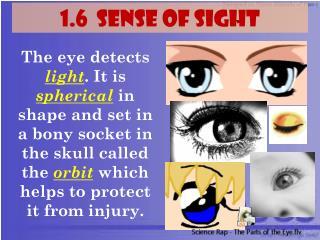 1.6  SENSE OF  SIGHT