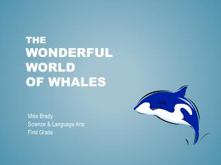 The Wonderful  World  of Whales