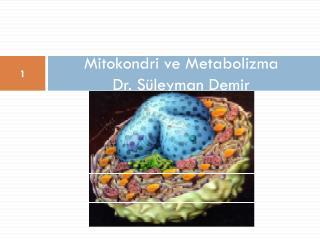Mitokondri ve Metabolizma Dr. Süleyman Demir