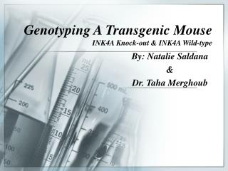 Genotyping A Transgenic Mouse INK4A Knock-out & INK4A Wild-type