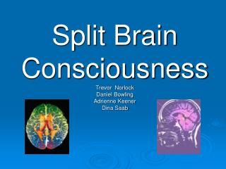 Split Brain Consciousness Trevor  Norlock Daniel Bowling Adrienne Keener Dina Saab