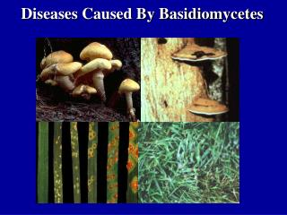 Diseases Caused By Basidiomycetes