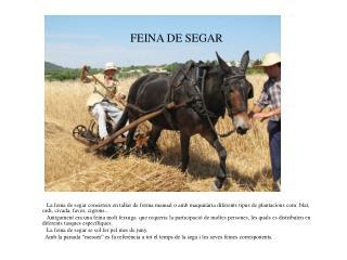 FEINA DE SEGAR