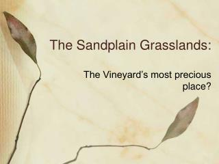 The Sandplain Grasslands:
