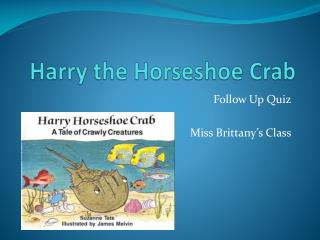 Harry the Horseshoe Crab