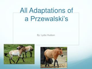 All Adaptations of a Przewalski's