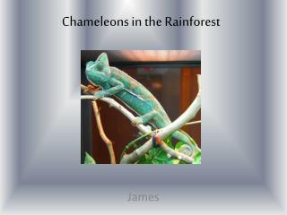 Chameleons in the Rainforest