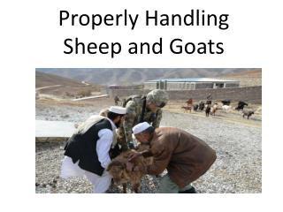 Properly Handling Sheep and Goats