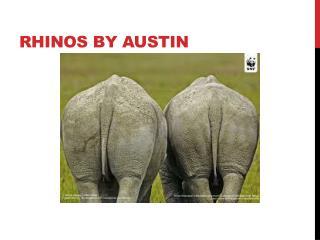 Rhinos By Austin