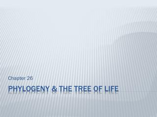 Phylogeny & The Tree of life