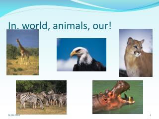 In, world, animals, our!