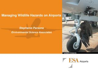 Managing Wildlife Hazards on Airports Stephanie Parsons Environmental Science Associates