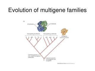 Evolution of multigene families