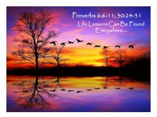 Proverbs 6:6-11; 30:24-31